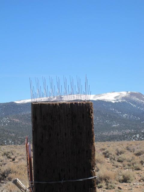 Hay-stack perch deterrent