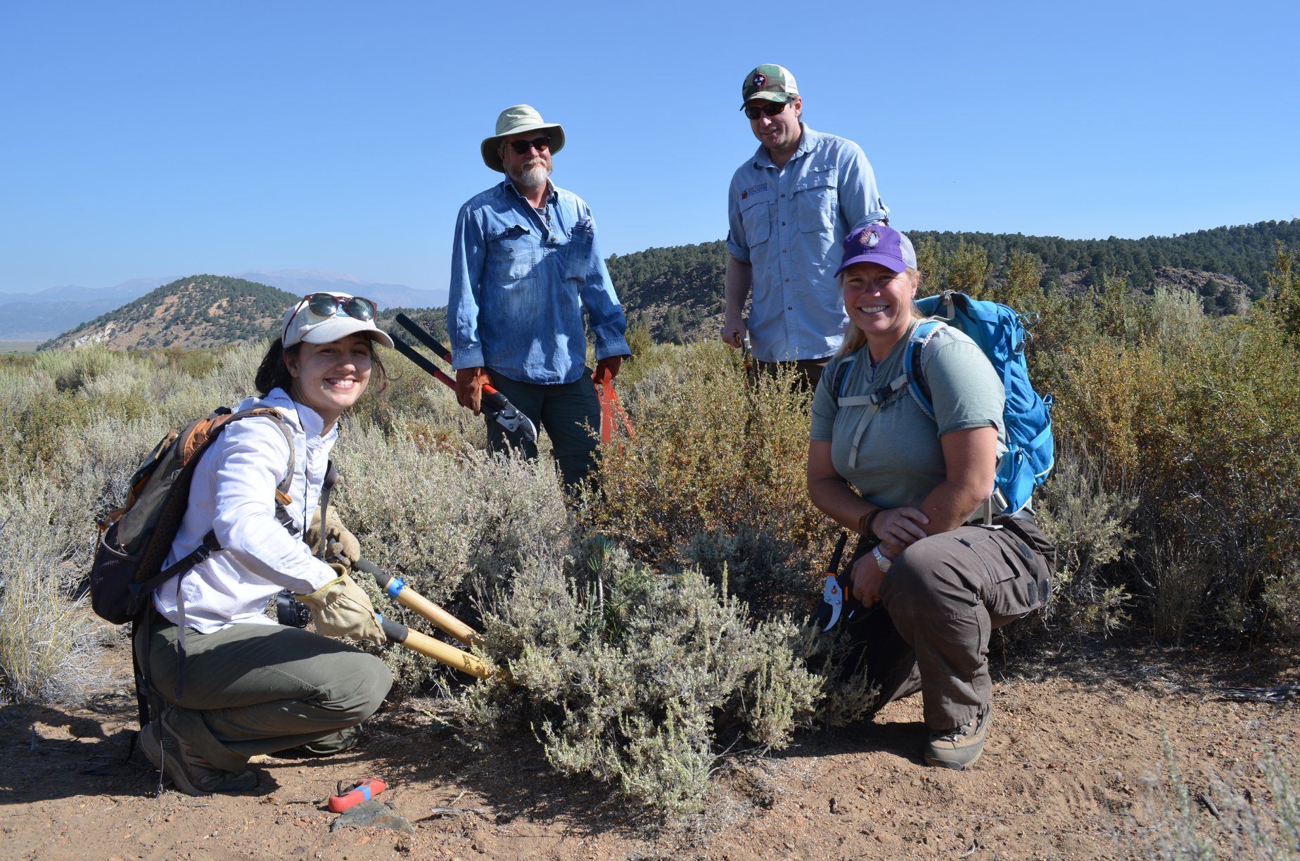 Eastern Sierra Land Trust and BLM collaborate to improve the sage brush ecosystem.