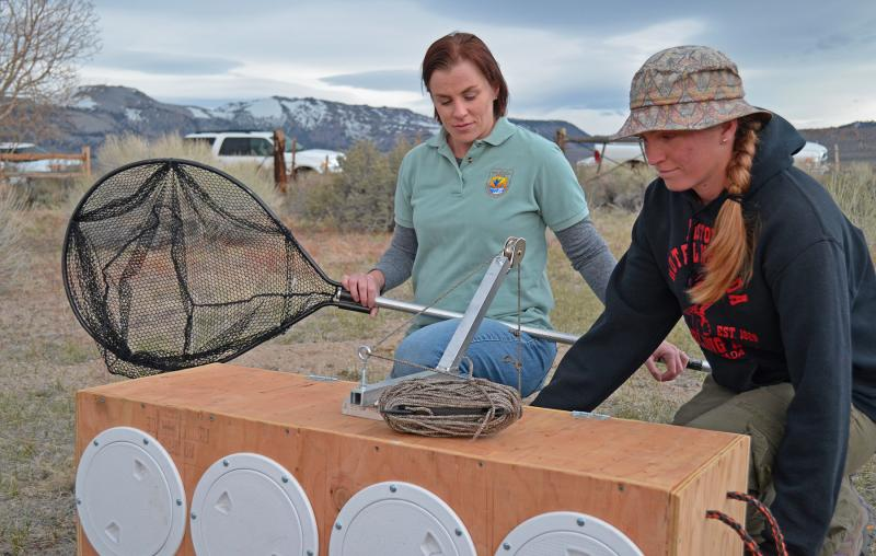 Biologist Erin Nordin (left), and biological science technician Mary Meyerpeter prepare a sage-grouse release box during the Parker Meadows translocation project. Credit: Dan Hottle/USFWS