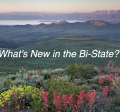 What's new in the Bi-State?