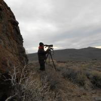 Counting sage-grouse at leks